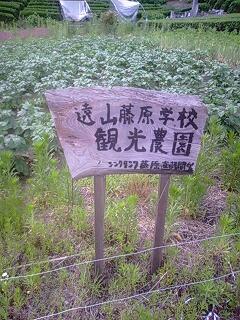 遠山観光農園