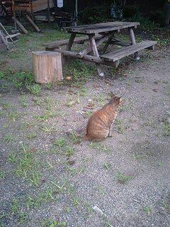 旧木沢小のネコ