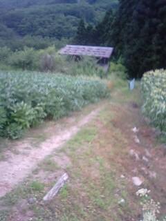 トンキラ農園