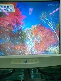 紅葉のしらびそ高原