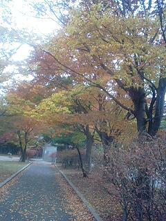 信州スカイパークの紅葉