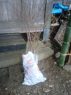 後片付けそして植樹