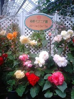 箱根ベコニア園