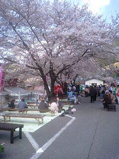 天龍桜まつり