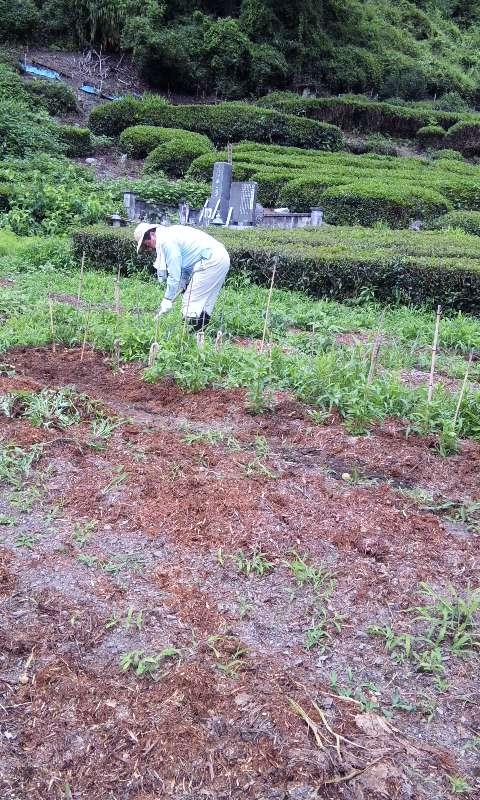農園雑草取り