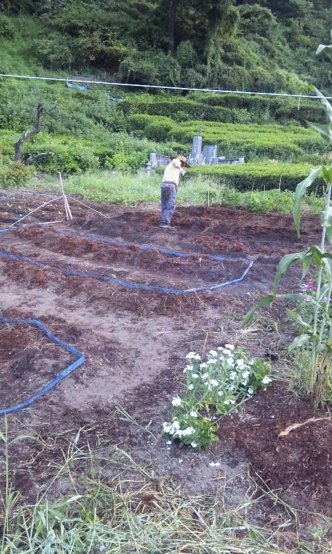 朝から農作業