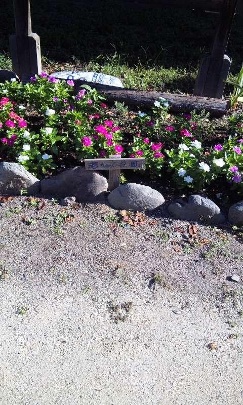 今朝の若ちゃん花園