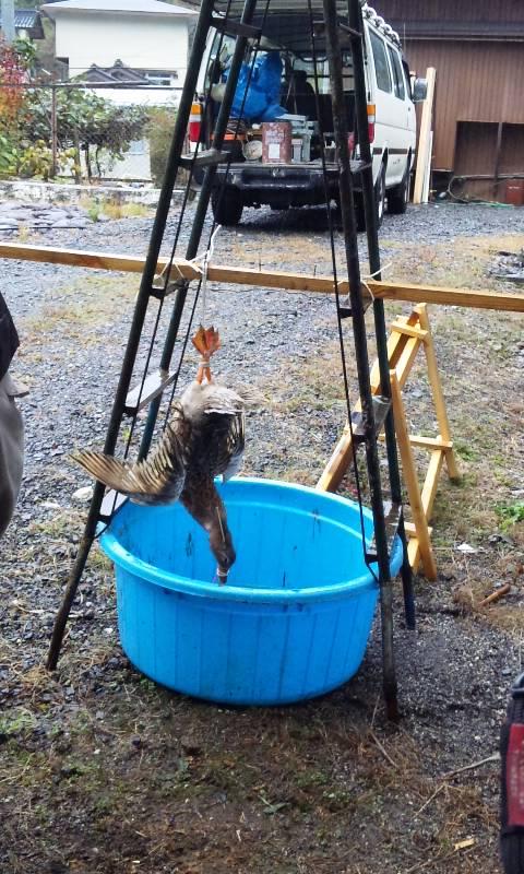 合鴨の解体準備