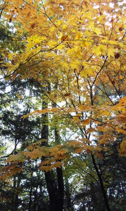 地蔵峠〜しらびそ高原までの紅葉  1