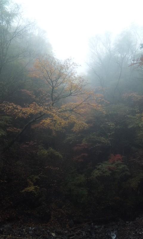 地蔵峠〜しらびそ高原までの紅葉 2