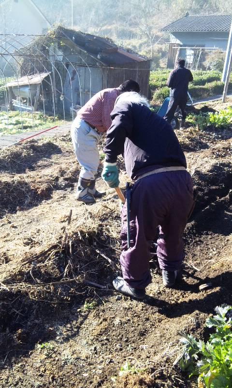 スタッフ農作業