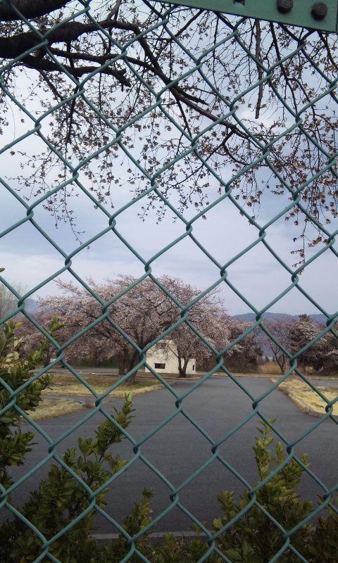 陸上自衛隊松本駐屯地の桜