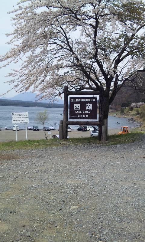 河口湖から西湖へ