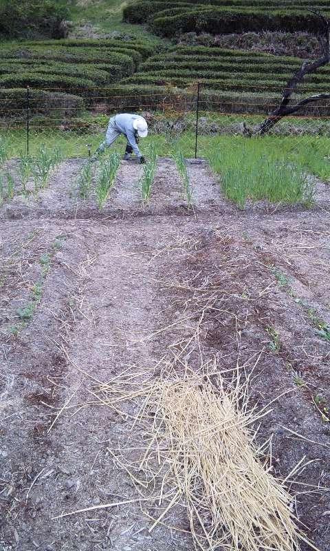 軽く農作業