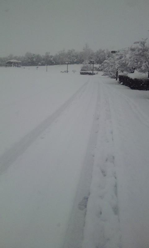雪降っても…